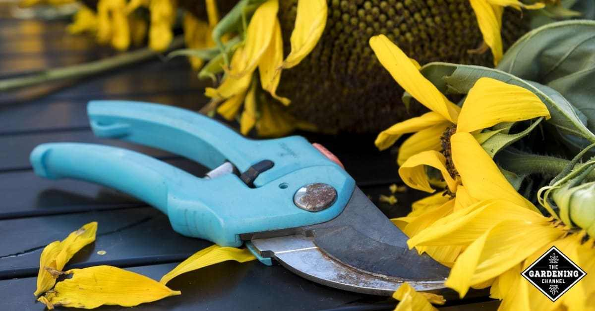 Greatest Speeches Shears For The Yard In Summer